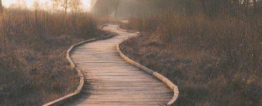 Pathway through wetlands