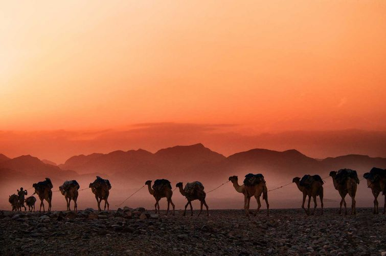 Camels walking against orange sky in Ethipia