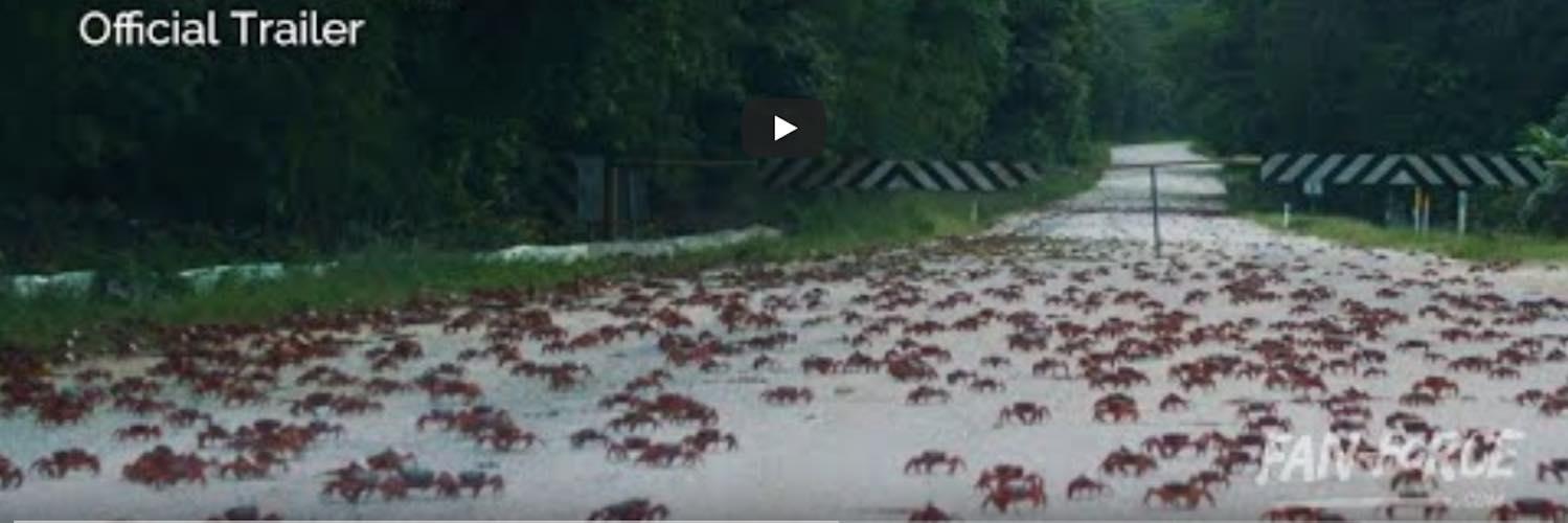 Crabs migrating on Christmas Island